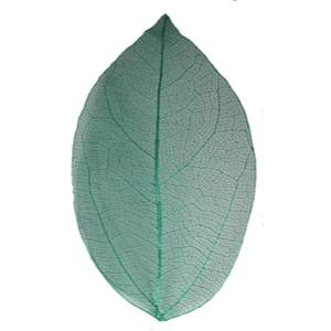 Сухой лист Mart зеленый 11