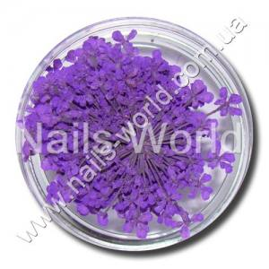 Сухоцветы Nails World веточки сиреневые