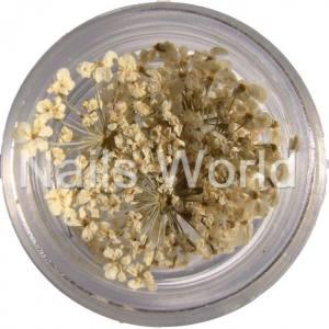 Сухоцветы Nails World веточки  белые