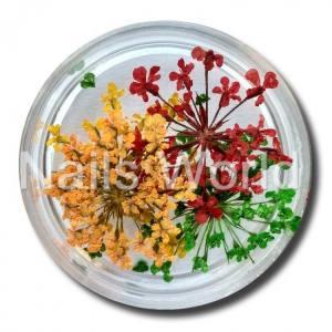 Сухоцветы Nails World веточки микс 4